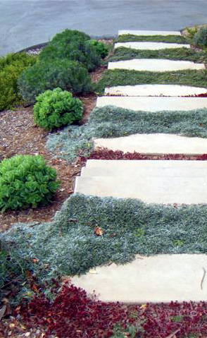 santa cruz landscape design project