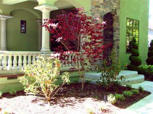Santa Cruz landscape client 3