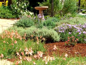 Santa Cruz landscape client 5